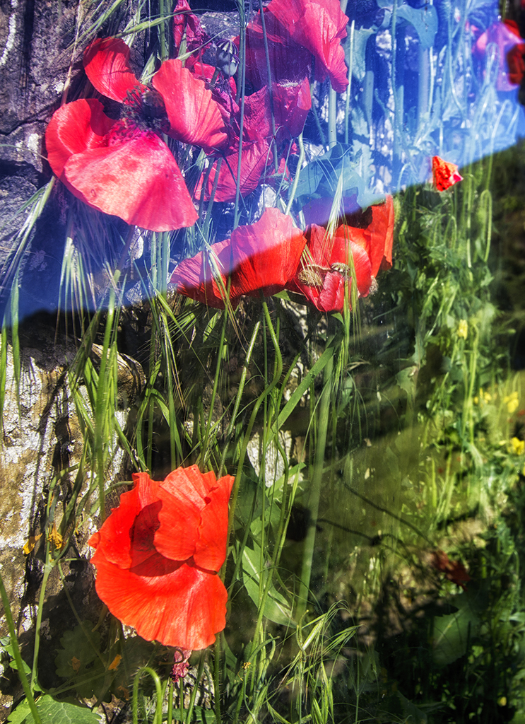Glass Poppies