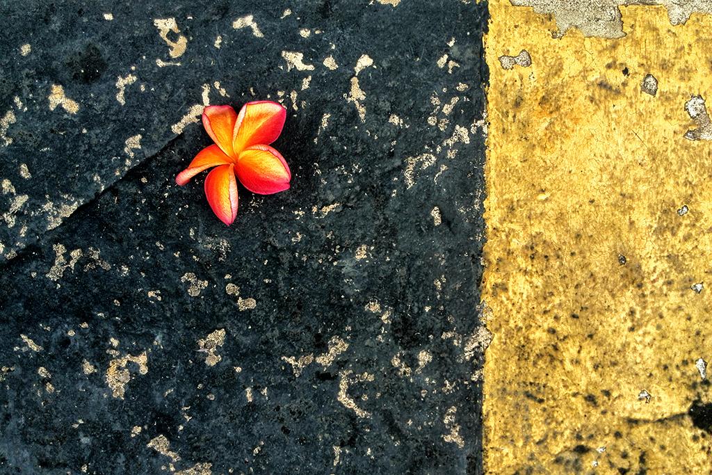 Flowers Must Die