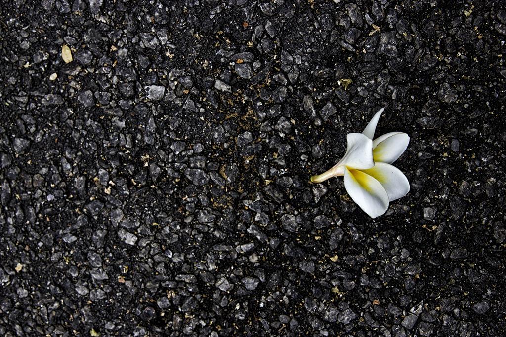 Flowers Must Die II