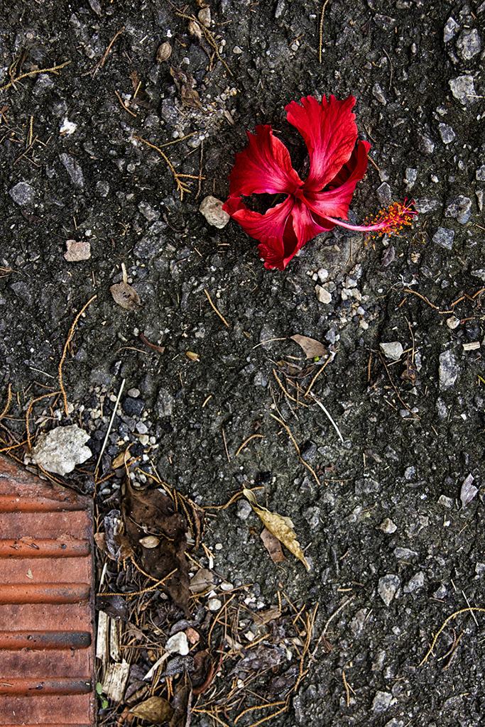 Flowers Must Die IV