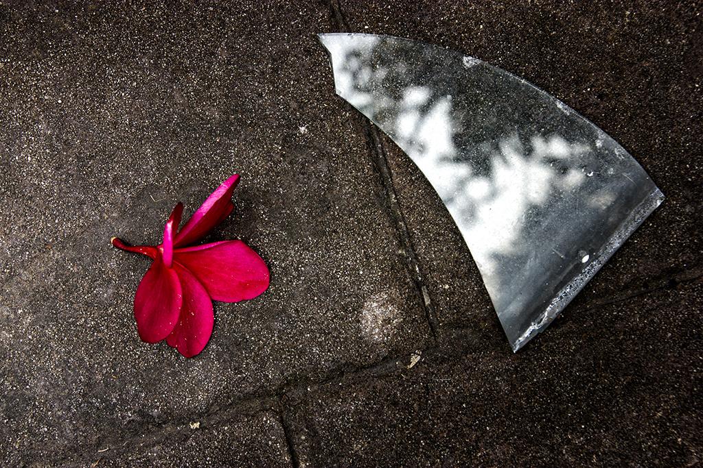 Flowers Must Die V