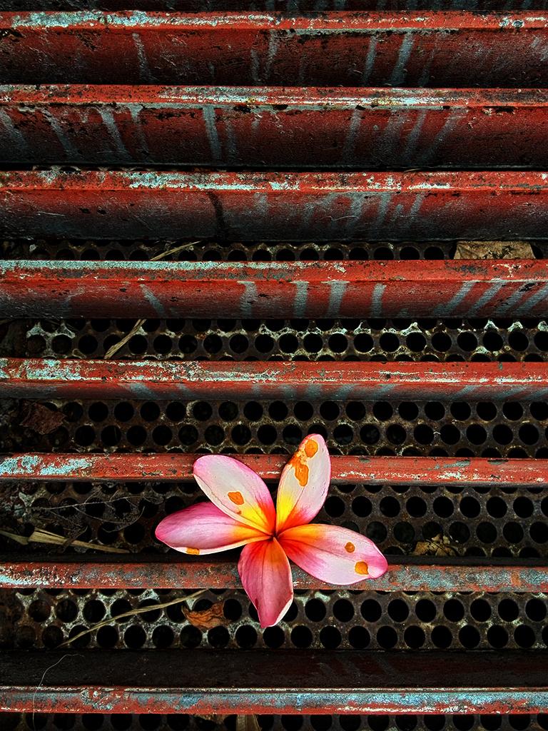 Flowers must die VI
