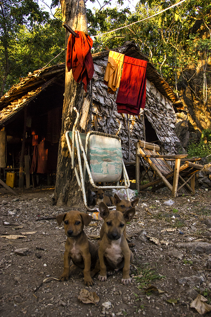 Puppies living with a monk near Hpa-an in Myanmar