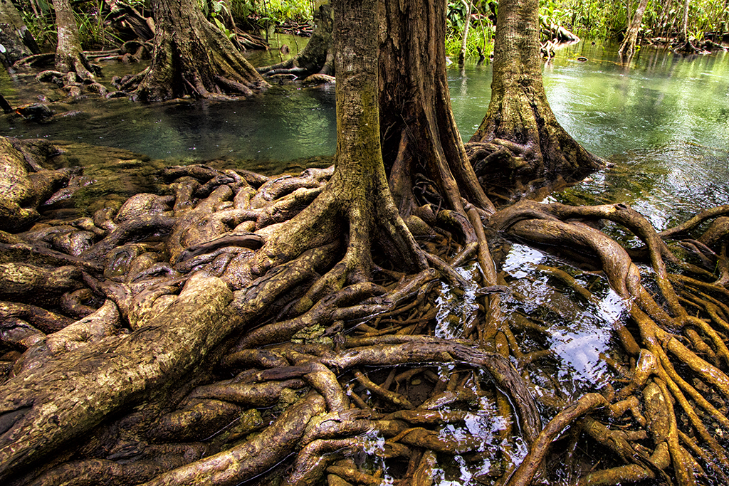 a-river-runs-into-the-wetlands-making-its-clear-water-in-phang-nga-np-thailand